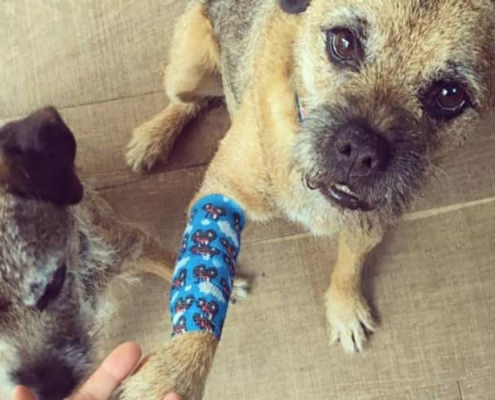 درمان زخم حیوانات